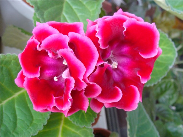Весеннее  цветение (Хваст от Веры) - Страница 2 1fe15d7c106e