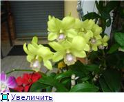 Орхидеи и прочая красота на о. Пхукет - Страница 2 E9918007246at