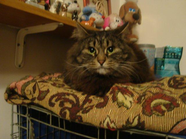 Наши собаки, друзья и гости, кот Мензурка - Страница 31 883ab1b60741