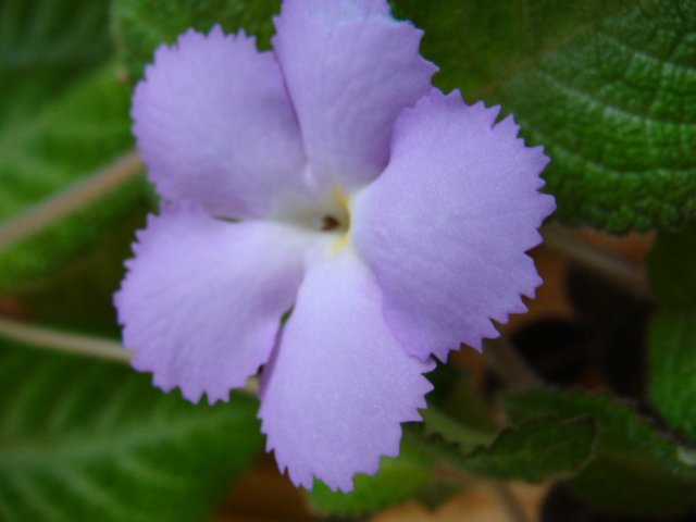 Мои цветочки - Страница 22 0968e7aa934d