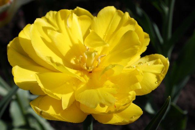 Растения от FILIGERa 1750f8ba4059