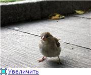 Птичий двор B6a85e77f651t