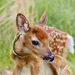 Аватары с животными - Страница 3 89870639e135