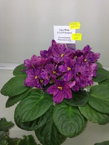 Выставка цветов - Страница 3 278898683c28