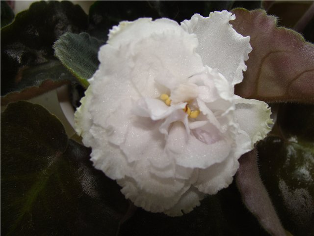 Весеннее  цветение (Хваст от Веры) - Страница 7 B545a6173cda