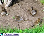 Птичий двор 13d71c77f0d5t