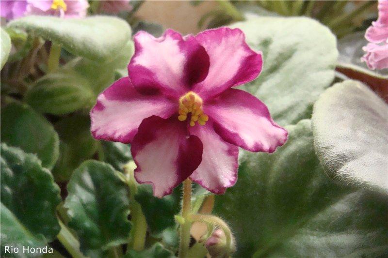 Весеннее  цветение (Хваст от Веры) - Страница 9 Ba8d07360b1e