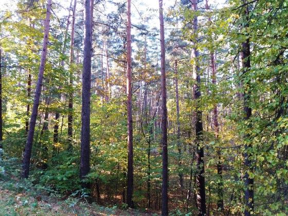 Осень, осень ... как ты хороша...( наше фотонастроение) - Страница 8 B5a2bd21f0e8