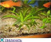 Подкормка растений глиняными шариками E9277f32350ct