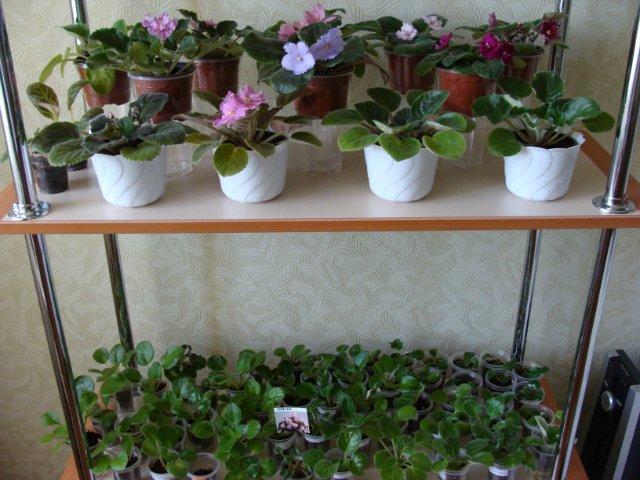 Мои цветочки Cb57c1425017