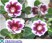 Наши цветочки 9f6b7dababeat