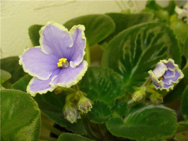 Весеннее  цветение (Хваст от Веры) - Страница 2 72114618b055