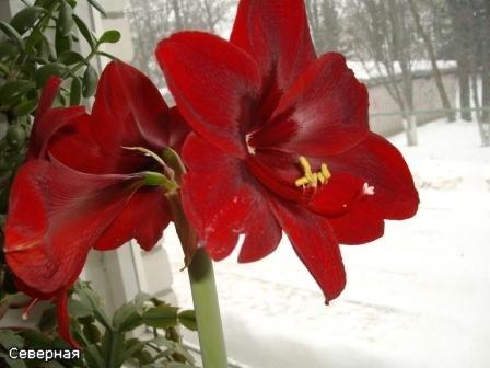 Цветочки Северной 1e3646416daf