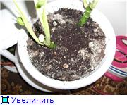 Дети это цветы жизни, а цветы ну как дети - Страница 3 8ae3afd86081t