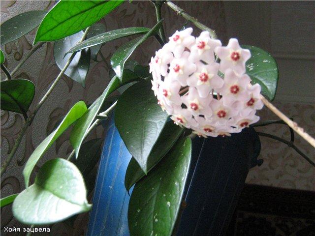Моё цветочное богатство - Страница 2 653ccc83009e