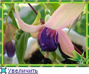ФУКСИИ В ХАБАРОВСКЕ  - Страница 2 2d5dcb5a0e67t