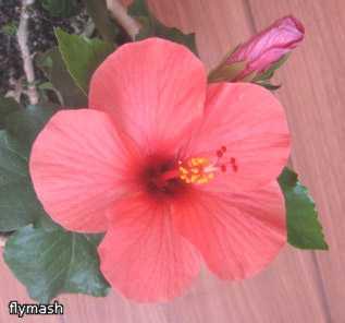 Мои джунгли - Страница 2 33f50a807638