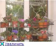 Дополнительное место для растений. 06e096446077t