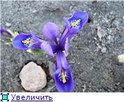 Весна идёт... 8ae5f2143d56t