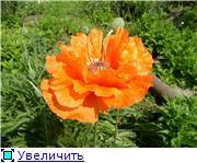 Лето в наших садах 2097e8e31d24t