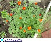 Лето в наших садах - Страница 6 53d8dd8313abt