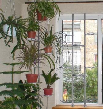 Дополнительное место для растений. 0019155be125
