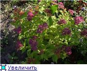 Лето в наших садах - Страница 4 477e9718b065t