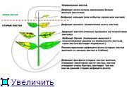 Фитоиндикация или Растения вместо тестов 19261193923dt