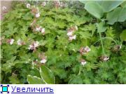 Моя Болгария. Рассказывает Eli4ka 11501c38a212t