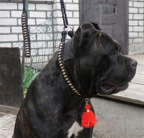 Magic Charm - ошейники, поводки, ринговки, вязаная одежда и другие аксессуары для собак - Страница 2 5f911d552917
