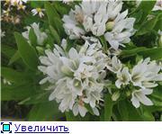 Помогите опознать растение. 19110b8e32f2t