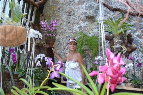 Выставка орхидей Никитского ботанического сада 2166be99cba1