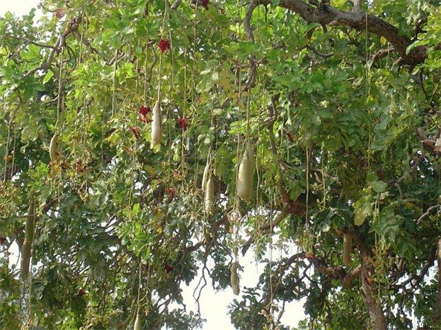 Уникальные растения мира. 20fa1e05212b