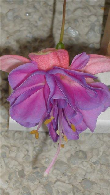 Мои любимые цветочки - Страница 40 F370b8515202