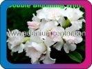 продам семена экзотических растений - Страница 3 1c60ff5ea6bd