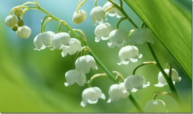 Растения, которые могут обеспечить человеку мучительную смерть B48a079f507f