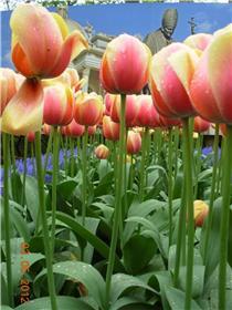Рай тюльпанов или Кёкнхов - 2012 Fd695b87a757t