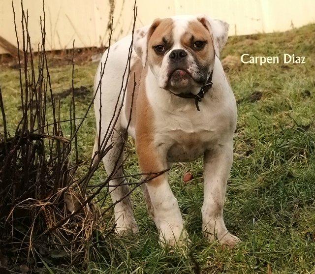 Собаки питомника Carpen Diaz - Страница 2 609d42780cab