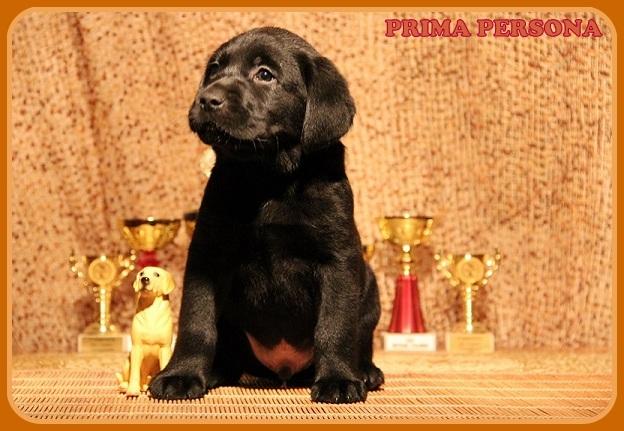 "Питомник ""Прима Персона"". Мои собаки-моя жизнь! F50f9ce7ae90"
