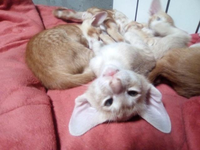 Домашние любимцы Кошки и Собаки - Страница 18 437b4d4c80d2