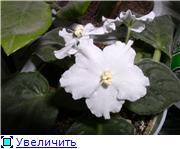 наши домашние цветники - Страница 2 19f3d196a044t