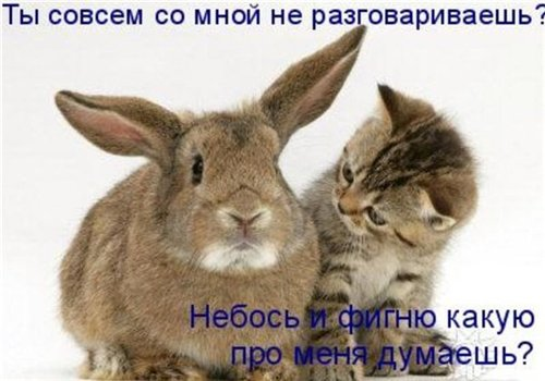 Фотографии кошек - Страница 2 00958470cba6