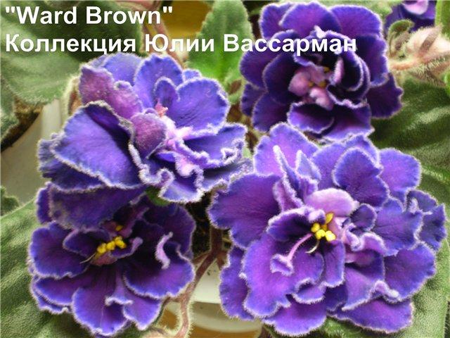 Ward Brown 9217d21c7ad8