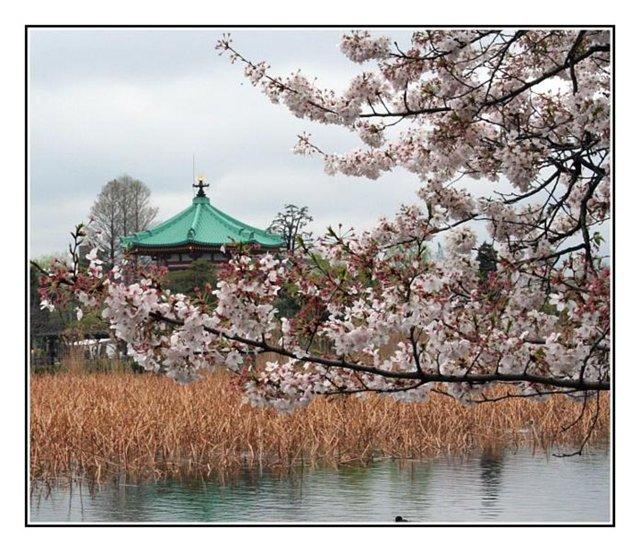 Красивые пейзажы Японии Ca5198695791