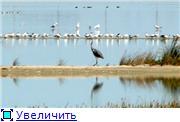 Николаев - город корабелов. 867027dd11cdt