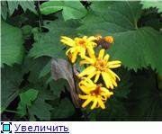 Растения для тени или Тенистый сад. 0bb26a74b8c4t