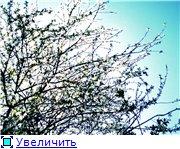 Фото... - Страница 2 0ca045854c72t