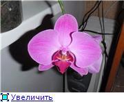 Фаленопсисы гибридные - Страница 3 8b895a1d8c82t