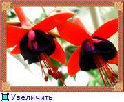 ФУКСИИ В ХАБАРОВСКЕ  - Страница 2 6b2bed3d3f71t