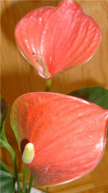 Мои любимые цветочки - Страница 39 05912c87bb0e